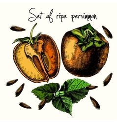 Set of ripe persimmon vector image vector image