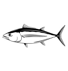 albacore tuna fish vector image