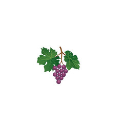 Grape branch floral wineyard retro sign garden vector