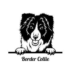 Peeking dog - border collie breed - head isolated vector