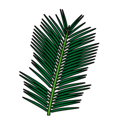 Tropical exotic palm leaves natural flora vector