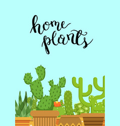with cacti in pots in flat vector image
