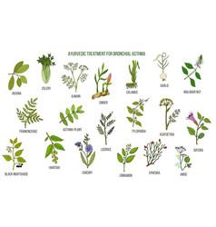 Ayurvedic herbs for asthma treatment vector