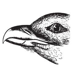 Buzzard beak vintage vector