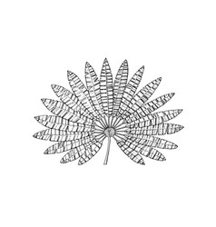 fan palm plant tropical or exotic leaves and leaf vector image
