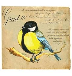 Hand painted Bird Tit vector