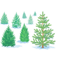 a set pine trees fir trees with varying vector image