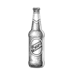 Beer bottle isolated vector