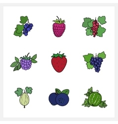 Berry Flat Design vector image