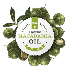 Macadamia oil label with hand drawn nuts vector