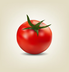 photo realistic red tomato vector image