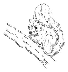 squirrel on a branch vector image