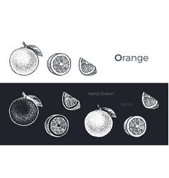 hand drawn orange and grapefruit fresh fruits set vector image