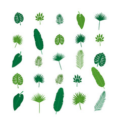 Set of tropical leaves nature elements for your vector