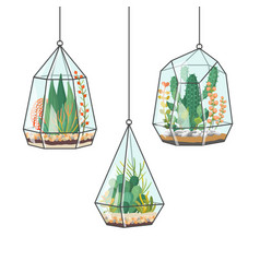 Tropical house plants and cactus in hanging vector