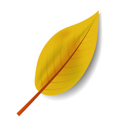 yellow leaf icon realistic style vector image