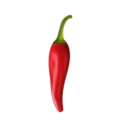 Red Pepper Isolated on White Background vector image vector image
