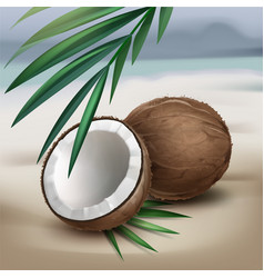 Coconuts on seaside vector