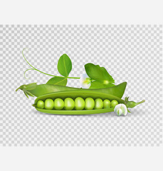 photo-realistic pods of green peas with vector image