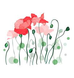 red poppy flowers over white vector image