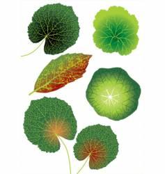 leaf illustration vector image vector image