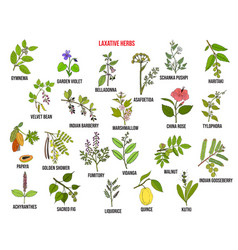 Best laxative herbs vector