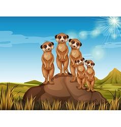 Meerkats standing on rock vector