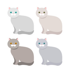 Scottish exotic shorthair cat with a different vector