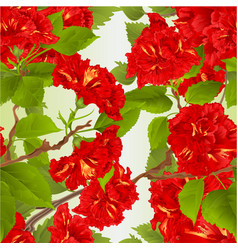 Seamless texture hibiscus red vector