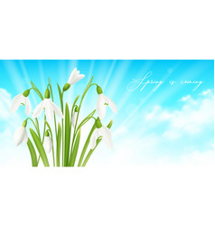 snowdrop flower horizontal background vector image