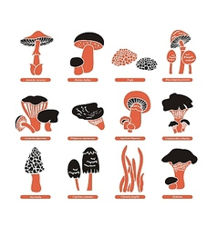 Edible Mushrooms Set vector image vector image