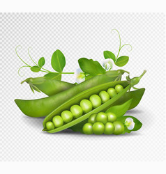 green peas photo-realistic pods of vector image vector image