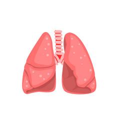 human lungs internal organ anatomy vector image