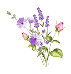 chicory garland elegant card vector image