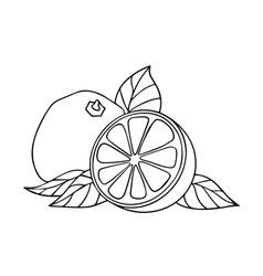 grapefrit citrus and a half vector image