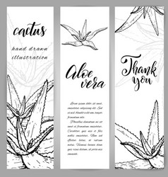 hand drawn aloe vera vector image