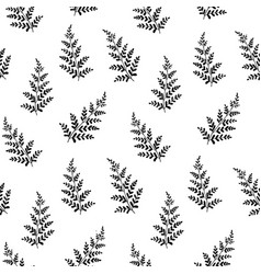 hand drawn fern leaves vector image