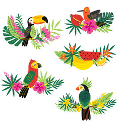 set isolated decorative tropical design vector image