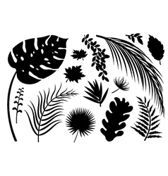 Set of silhouette leaves on white background vector
