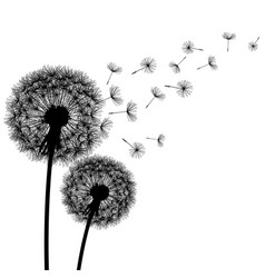 Nature background with dandelion silhouette vector