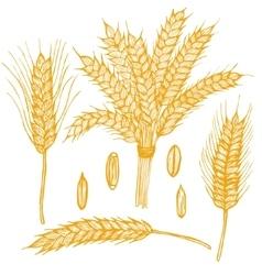 Ears Hand Draw Sketch vector image vector image