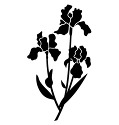 black silhouettes of iris vector image vector image