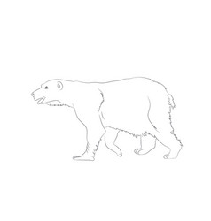 a bear that stands vector image