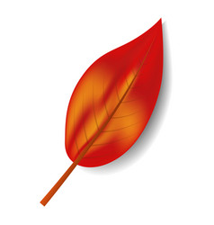 autumn red leaf icon realistic style vector image
