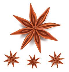 Natural badiyan stars or anise stars condiments vector