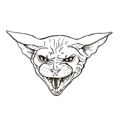 angry cat of the sphinx breed vector image