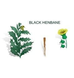 BLACK HENBANE vector