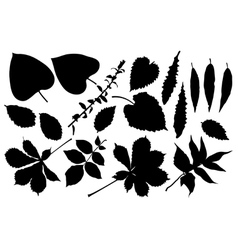 black silhouette of leafs vector image