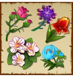 Bright set of five different types of flowers vector