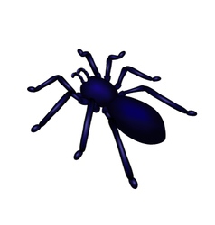 spider vector image